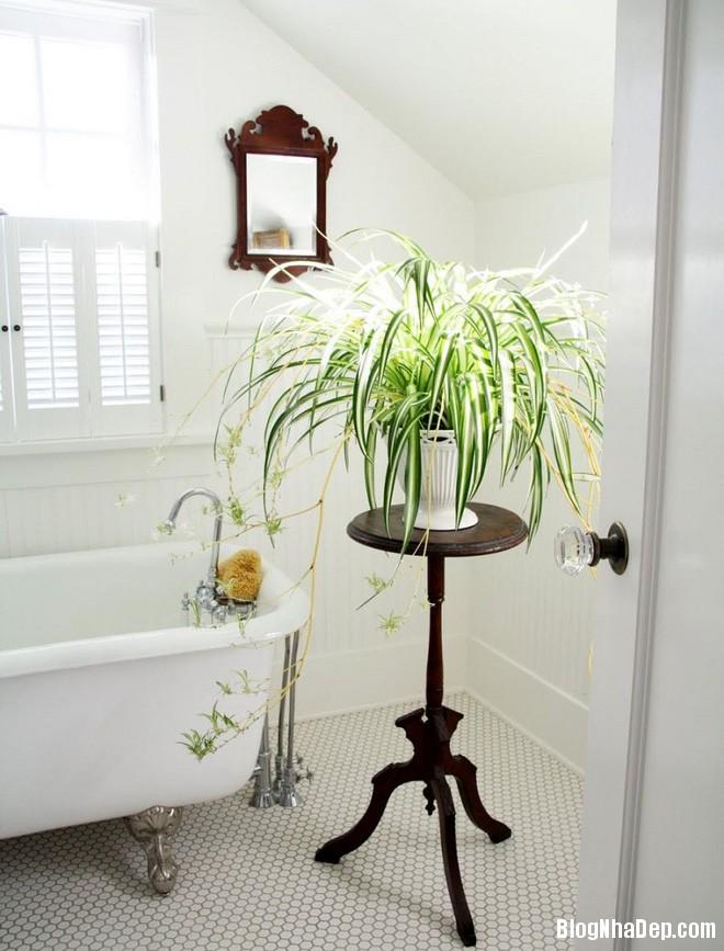 img20170526142946336 'Xanh hóa' không gian phòng tắm đem lại cảm giác bình yên