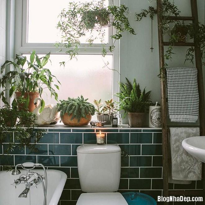 img20170526142948696 'Xanh hóa' không gian phòng tắm đem lại cảm giác bình yên