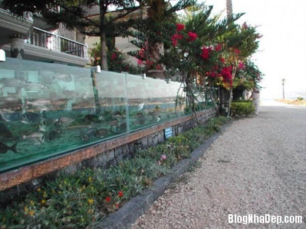 beca080114 3 Mehmet biệt thự với hàng rào bằng dãy bể cả dài 50m