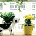 trồng cây cho ngôi nhà đẹp_KĐ