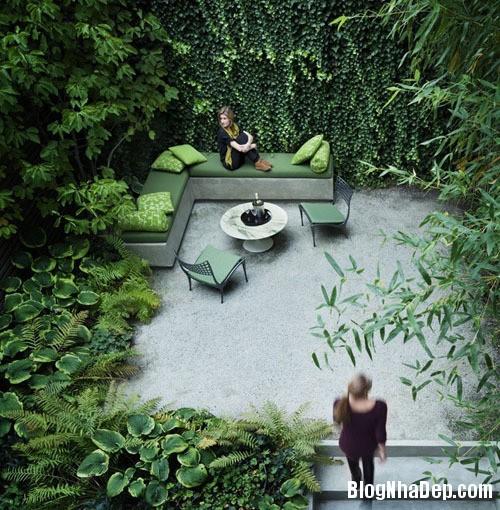 file.320465 Tạo không gian vườn cho nhà phố
