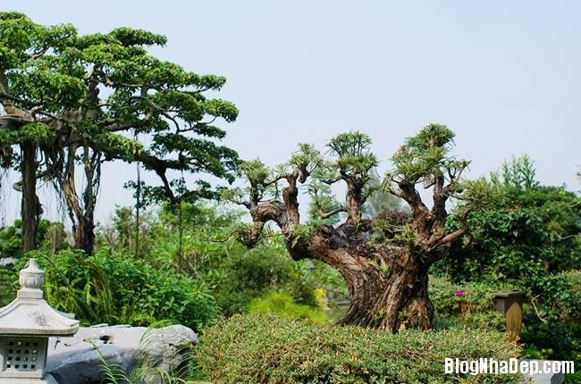 file.341788 Thăm khu trang trại riêng ở Gia Lâm, Hà Nội của Sao Mai Khánh Ly