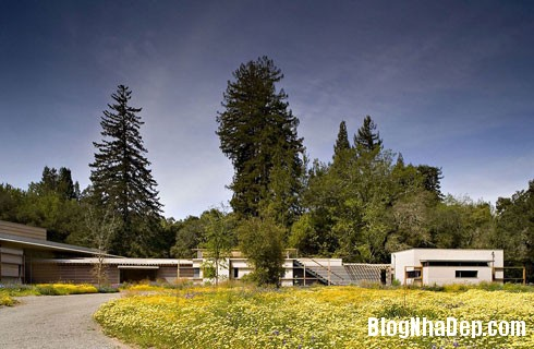 file 00250 Ngôi nhà hiện đại trên đồng cỏ xanh ngắt