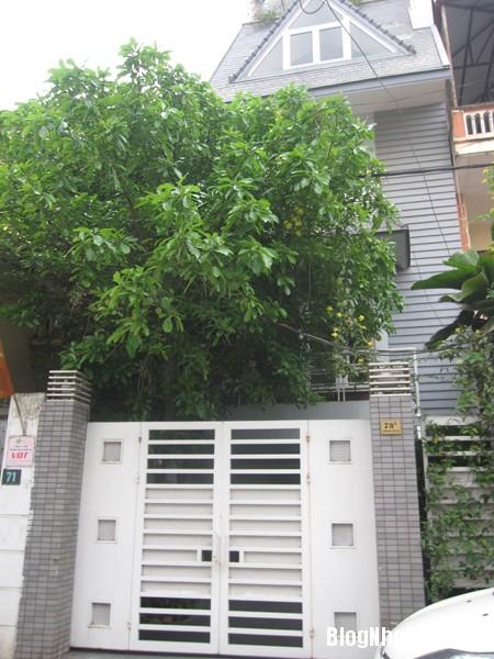 file 00479 Ngôi nhà rộng rãi của nhạc sĩ Phú Quang