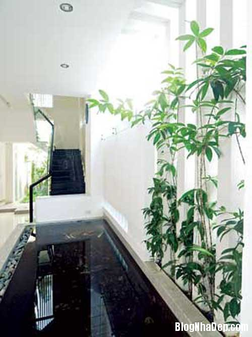 ngoi nha nhieu goc xanh5 Ngôi nhà thân thiện với thiên nhiên