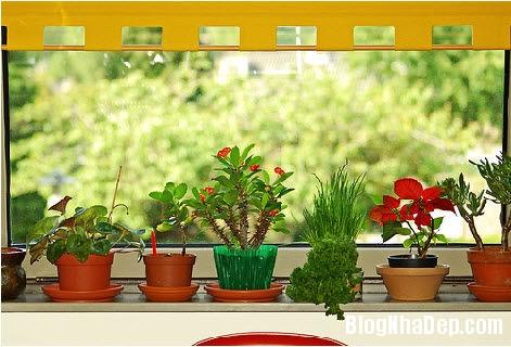 20140604071819314 Xoa dịu cái nắng của mùa hè trong căn nhà nhỏ