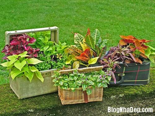 file.403843 Một chút khéo léo cho khu vườn thêm đẹp