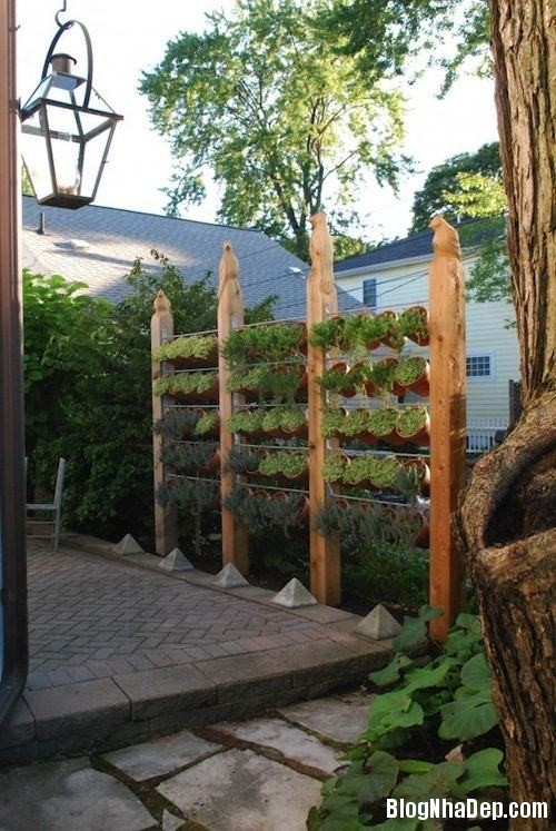 file.407591 Bài trí sân vườn với hàng rào cây xanh