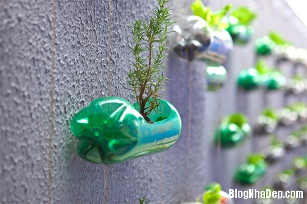 file 00313 Đem không gian xanh mát vào ngôi nhà bạn