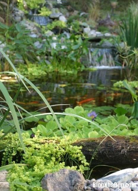 file 01113 Bài trí ao nước róc rách cho khu vườn
