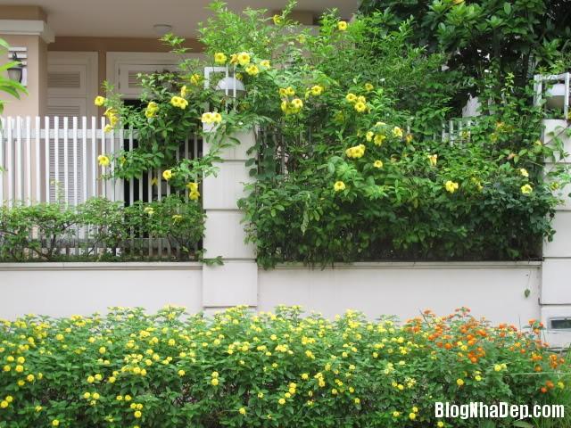 file 01114 Đem không gian xanh mát vào ngôi nhà bạn