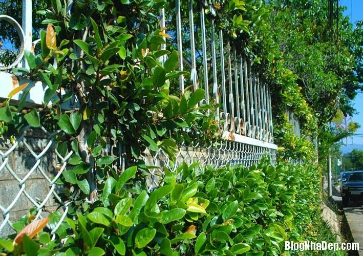 file 01415 Những bờ rào đẹp mộng mơ của Đà Lạt