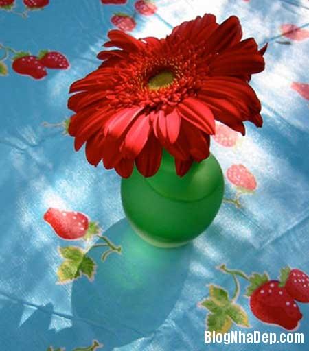 net tre trung trong su ket hop ngoc lam va do 9 Sự kết hợp ăn ý giữa màu ngọc lam và đỏ
