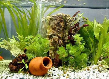 thiet ke be ca trong phong khach 2 Trang trí bể cá cho ngôi nhà thêm sinh động