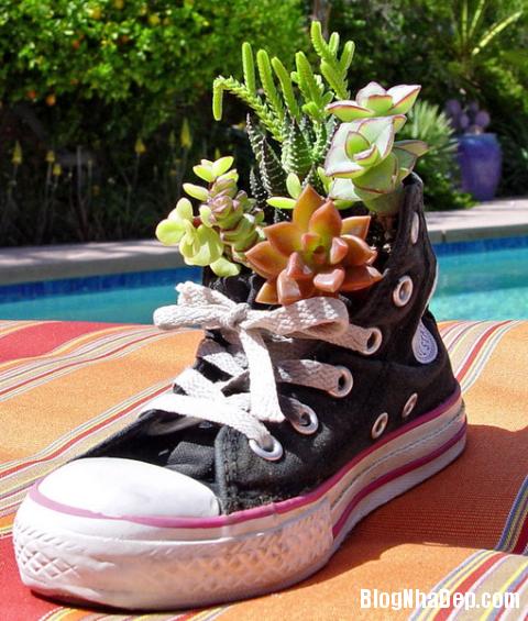 y tuong doc dao trong cay vao giay cu 12 Độc đáo chậu hoa được tận dụng từ giày dép cũ