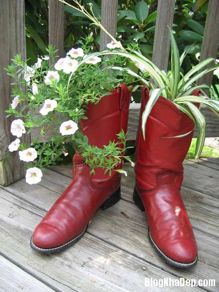 y tuong doc dao trong cay vao giay cu 6 Độc đáo chậu hoa được tận dụng từ giày dép cũ