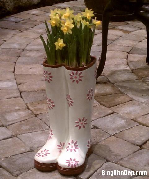 y tuong doc dao trong cay vao giay cu 7 Độc đáo chậu hoa được tận dụng từ giày dép cũ