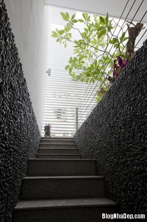 1403596080 11 Nhà ống 80m2 tràn ngập không gian xanh ở Sài Gòn