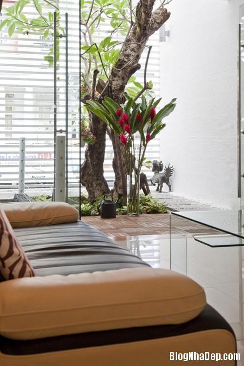 1403596080 12 Nhà ống 80m2 tràn ngập không gian xanh ở Sài Gòn