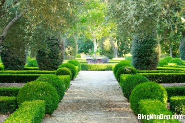 20140630074104147 Những mẫu tỉa cây cảnh đẹp cho sân vườn