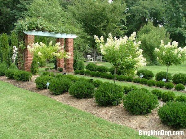 20140630074104397 Những mẫu tỉa cây cảnh đẹp cho sân vườn