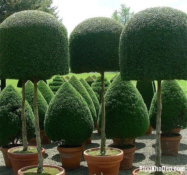 20140630074104693 Những mẫu tỉa cây cảnh đẹp cho sân vườn