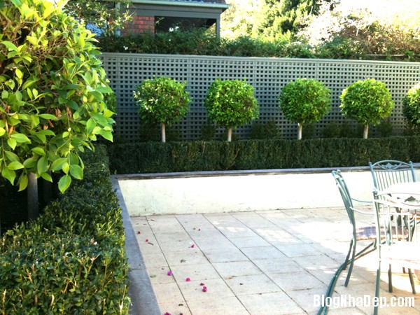 20140630074104989 Những mẫu tỉa cây cảnh đẹp cho sân vườn