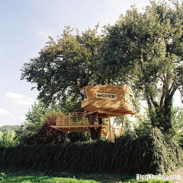 447c16257350598e8bcf8c98c75687cd Ngắm những ngôi nhà trên cây độc đáo trên thế giới