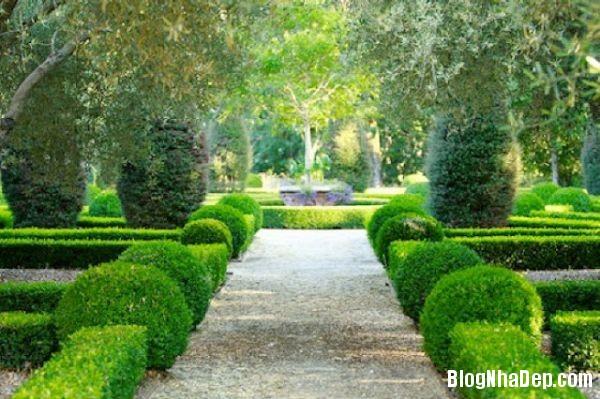362cfa116e901089005fa5e326d362a7 Hàng rào cây xanh yên tĩnh và xanh mát