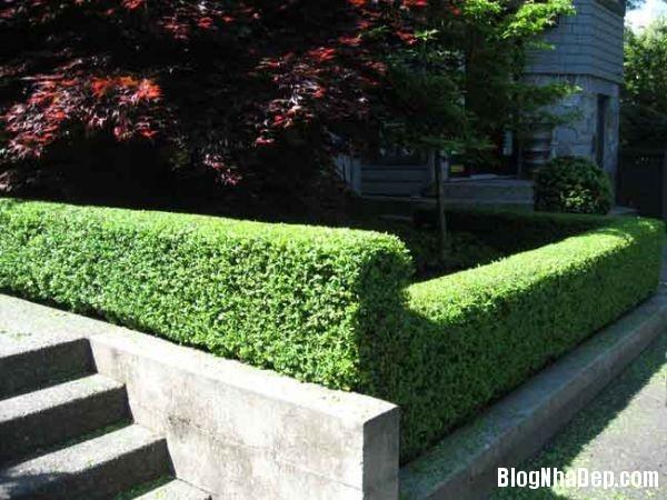 f8cbf968f5c14e3f1f6659b4777e4e69 Hàng rào cây xanh yên tĩnh và xanh mát