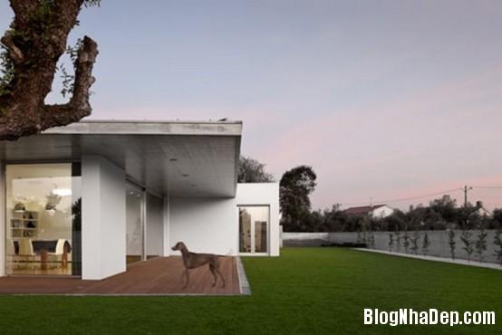 91a0231f75d526af76cb3085cdf90bd2 Ngôi nhà ấn tượng với thiết kế minimalist ở Bồ Đào Nha
