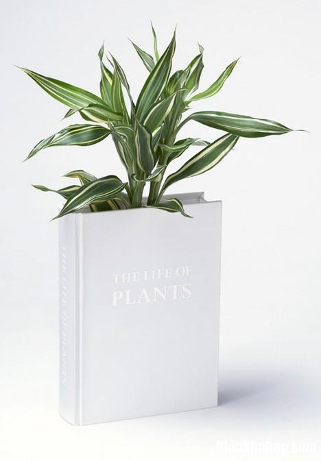 """83a6a5ee2c77865e205730d5a68fa1db Thiết kế chậu cây """"sách"""" độc đáo của YOY Design Studio"""