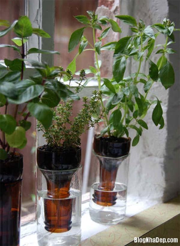 image007 Bí quyết mang khu vườn thảo mộc vào nhà