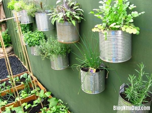image011 Bí quyết mang khu vườn thảo mộc vào nhà